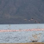 Kenya, Lake Bogoria, Flamingos; Photos: Wolfgang Schmale