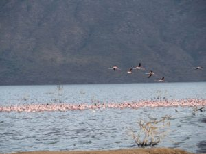 Kenya, Lake Bogoria, Flamingos; Photos: Wolfgang Schmale