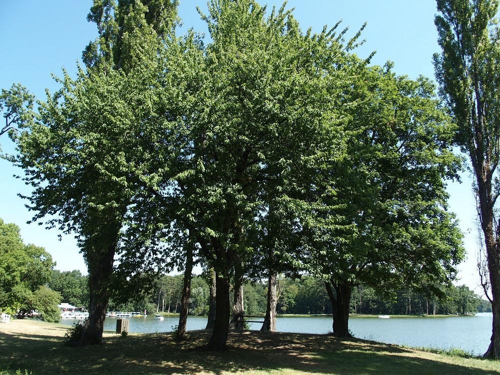 sog. Rousseau Hügel, Schlosspark Laxenburg; Foto: Wolfgang Schmale